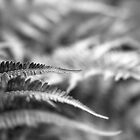 Fern 1 - Black and White by ThomsonStudios