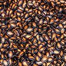 Seeds by Trevor Middleton