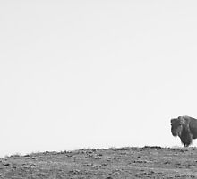Bison On a Hill BW by Bo Insogna