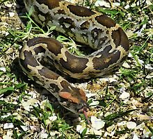 ☝ ☞ OH THE SNAKES CRAWL AT NIGHT. WHEN THE SUN GOES DOWN THE SNAKES WILL PLAY☝ ☞  by ✿✿ Bonita ✿✿ ђєℓℓσ