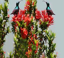 Ƹ̴Ӂ̴Ʒ BIRDS IPAD CASE Ƹ̴Ӂ̴Ʒ by ╰⊰✿ℒᵒᶹᵉ Bonita✿⊱╮ Lalonde✿⊱╮