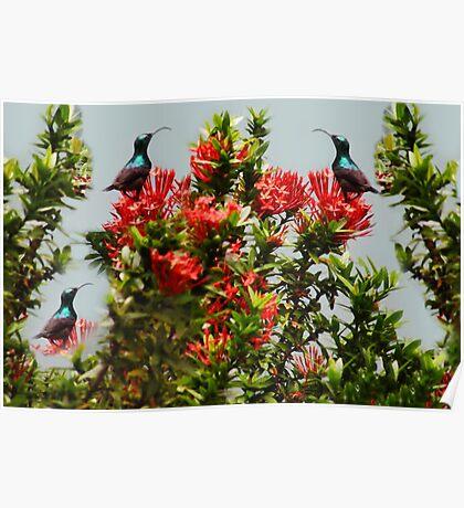 Ƹ̴Ӂ̴Ʒ PRECIOUS BIRDS Ƹ̴Ӂ̴Ʒ Poster