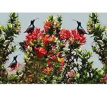 Ƹ̴Ӂ̴Ʒ PRECIOUS BIRDS Ƹ̴Ӂ̴Ʒ Photographic Print