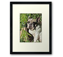 Furghy in the Ferns Framed Print