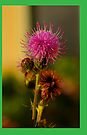 thistle flower iphone by dedmanshootn