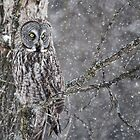 Owl Incognito 4 by Ginny Fobert