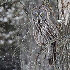 Owl Incongito 2 by Ginny Fobert