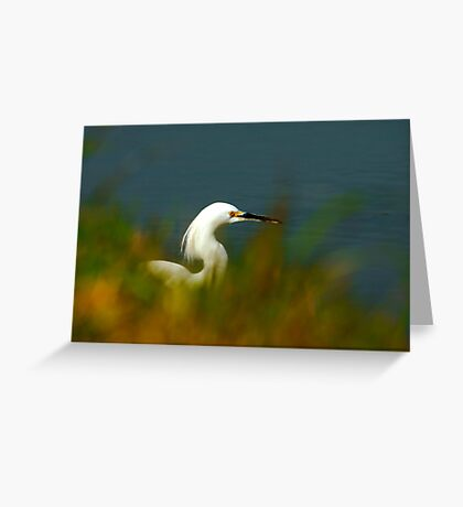 Egret Thru the Grasses Greeting Card
