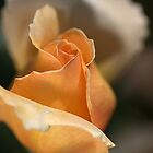 The Rose Bud by Joy Watson