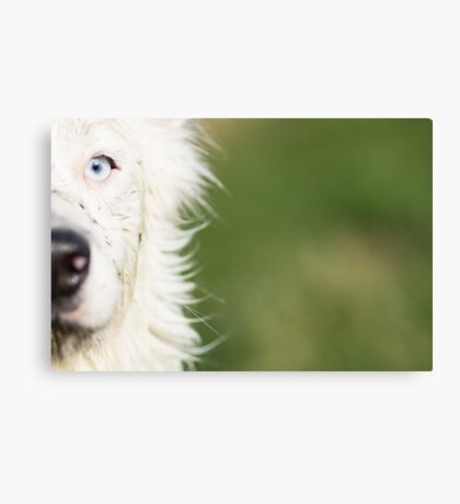 The bright side of Harrie Canvas Print
