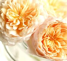 Orange Centrepiece by Aileen David