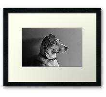 Model Dog Framed Print