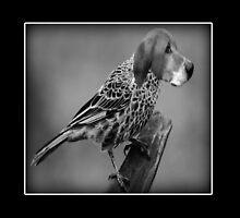 ☝ ☞ HE'S A BIRD DOG IPAD CASE ☝ ☞ by ╰⊰✿ℒᵒᶹᵉ Bonita✿⊱╮ Lalonde✿⊱╮