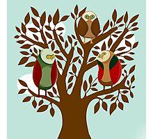 Owl Family Photographic Print
