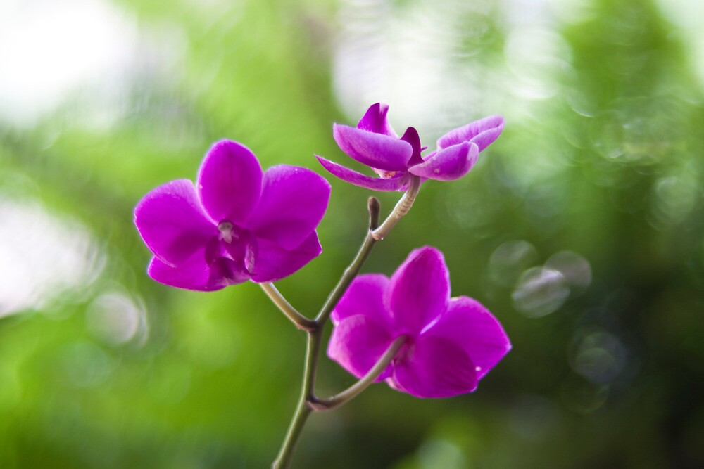Orchid by Jay Reed