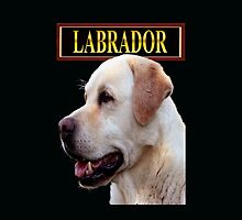 Labrador retriever by Johnny Furlotte