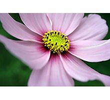 Flower, Pretty Flower Photographic Print