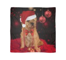 Border Terrier Dog in Christmas Santa Hat Scarf