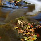 autumn stream in the black mountains brecon beacons  by blakmountphoto