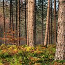 Ousbrough Woods by Great North Views