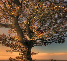 Autumn Tree by Great North Views