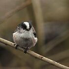 Long Tailed Tit 2 by Hovis