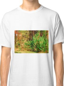 Young shoots of pine Classic T-Shirt