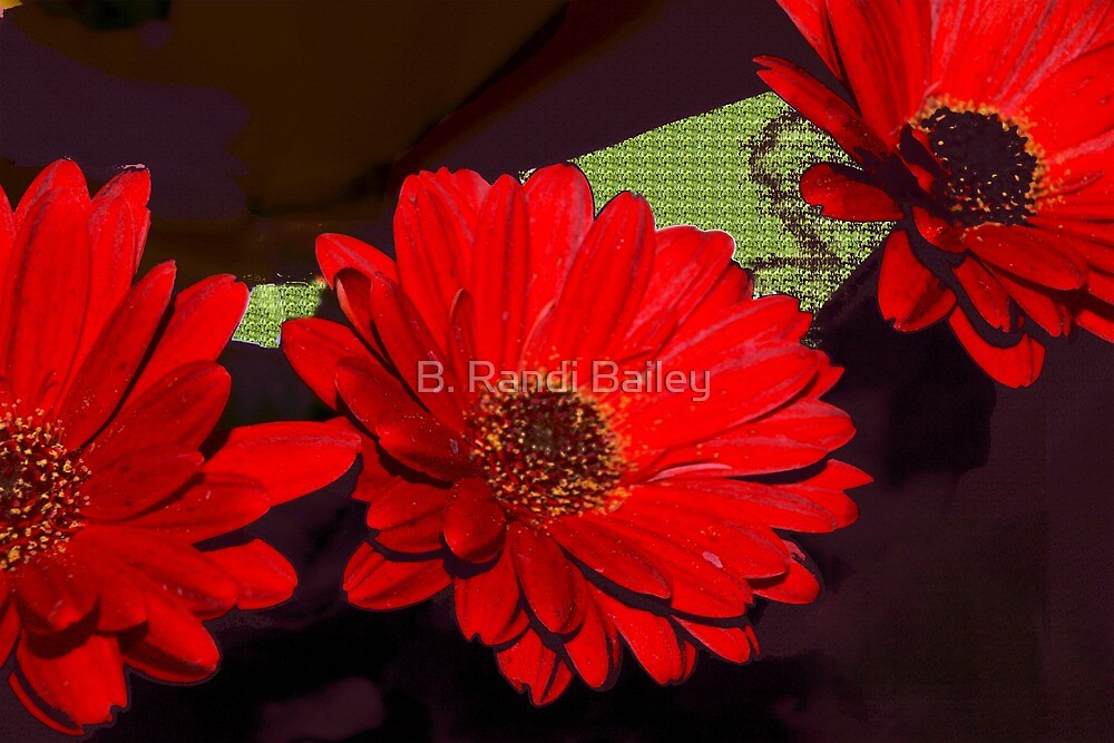 Red gerbera daisies by ♥⊱ B. Randi Bailey