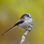 Long- tailed tit by M.S. Photography/Art