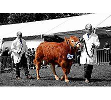 Northumberland Show 2012 Photographic Print