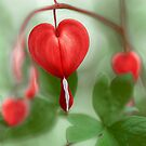 Natures Valentine by Mandy Disher