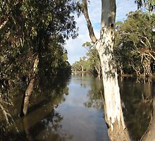 Looking Up the Murrumbidgee River,  Balranald N.S.W. Aus. by Rita Blom