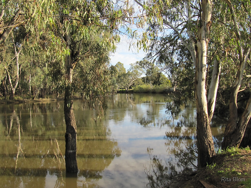Looking Down the Murrumbidgie River, Balranald N.S.W. Aus. by Rita Blom