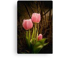 Pink Tulips VRS2 Canvas Print