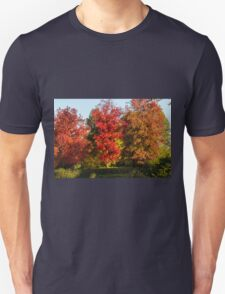 tree in the park in autumn T-Shirt