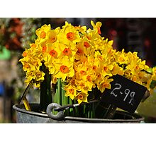 Daffs For Sale Photographic Print