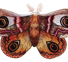 Watercolour Moth  by Hannah-Hitchman
