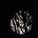 Twilight Moon by ScenerybyDesign