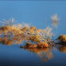 Marsh Life by Mark Ingram
