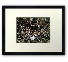 The Middle Way Framed Print