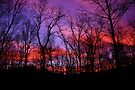 God Painted The Winter With Color by NatureGreeting Cards ©ccwri