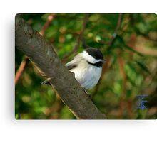 Chickadee-Small Bird in Oil Canvas Print