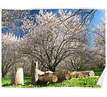 Woodpile in the Almond Orchard Poster