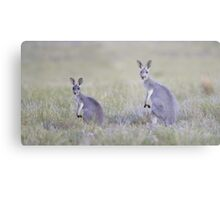 Red Kangaroos Metal Print
