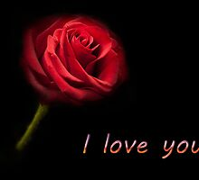 I love you - Single Red Rose by Simon West
