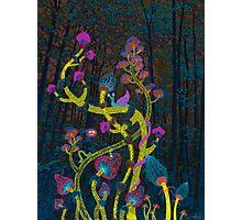 Magic mushrooms Photographic Print