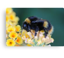 More of the bumble bee  Canvas Print