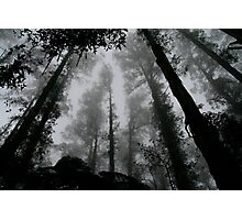 Treetops in fog Photographic Print
