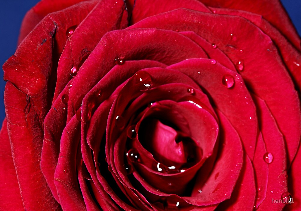 The Rose-macro by henuly1
