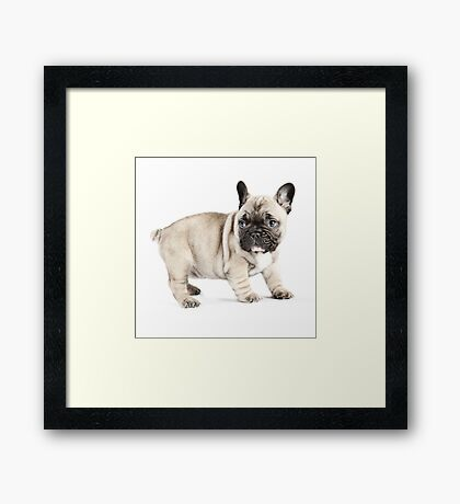 Walkabout Framed Print
